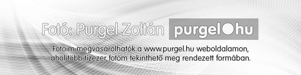 Fotóim megvásárolhatók a Purgel.hu weboldalamon, ahol több tízezer fotóm tekinthető meg rendezett formában.