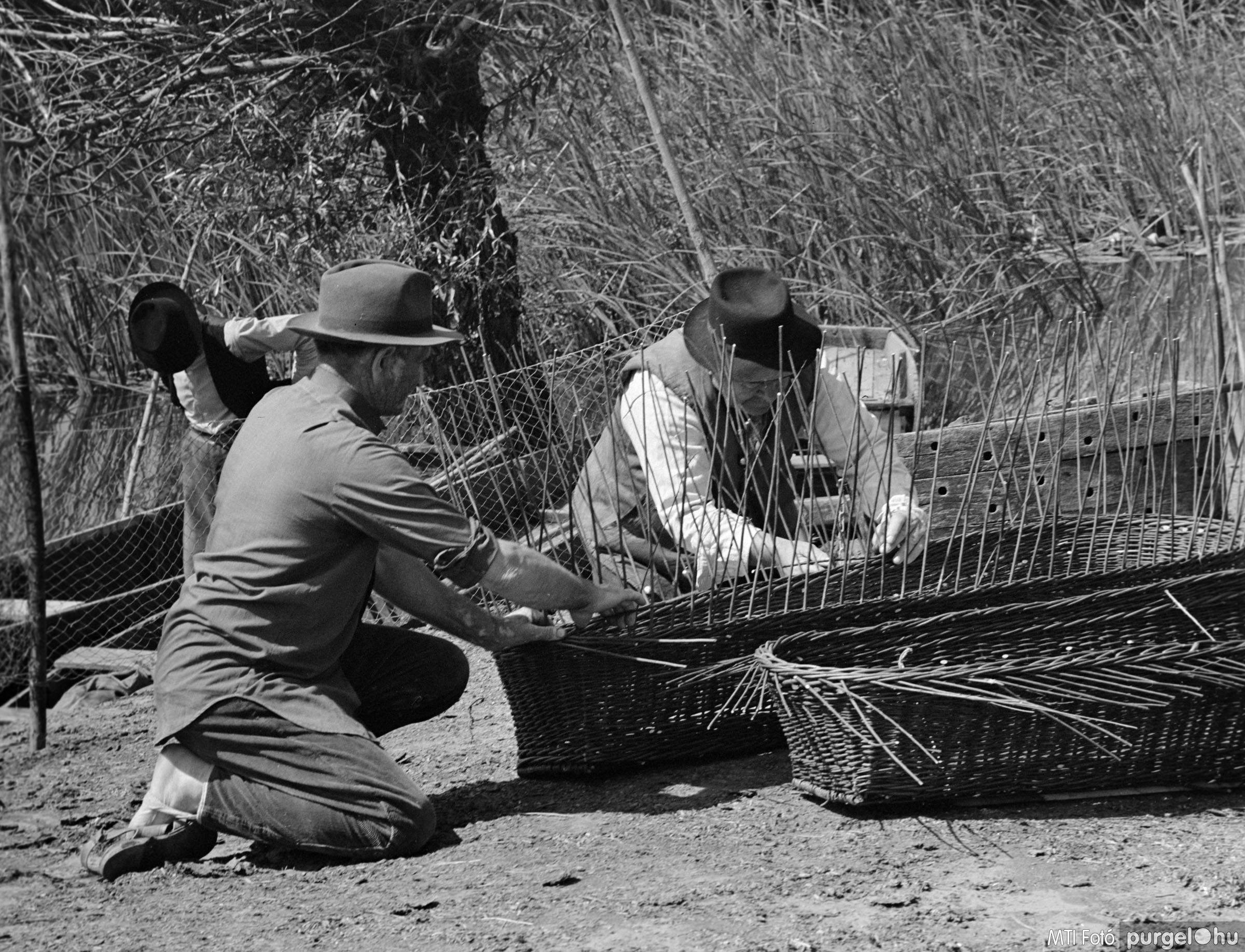 Fűzfavessző koporsó készítés II. Szegvár, 1970. július 3.